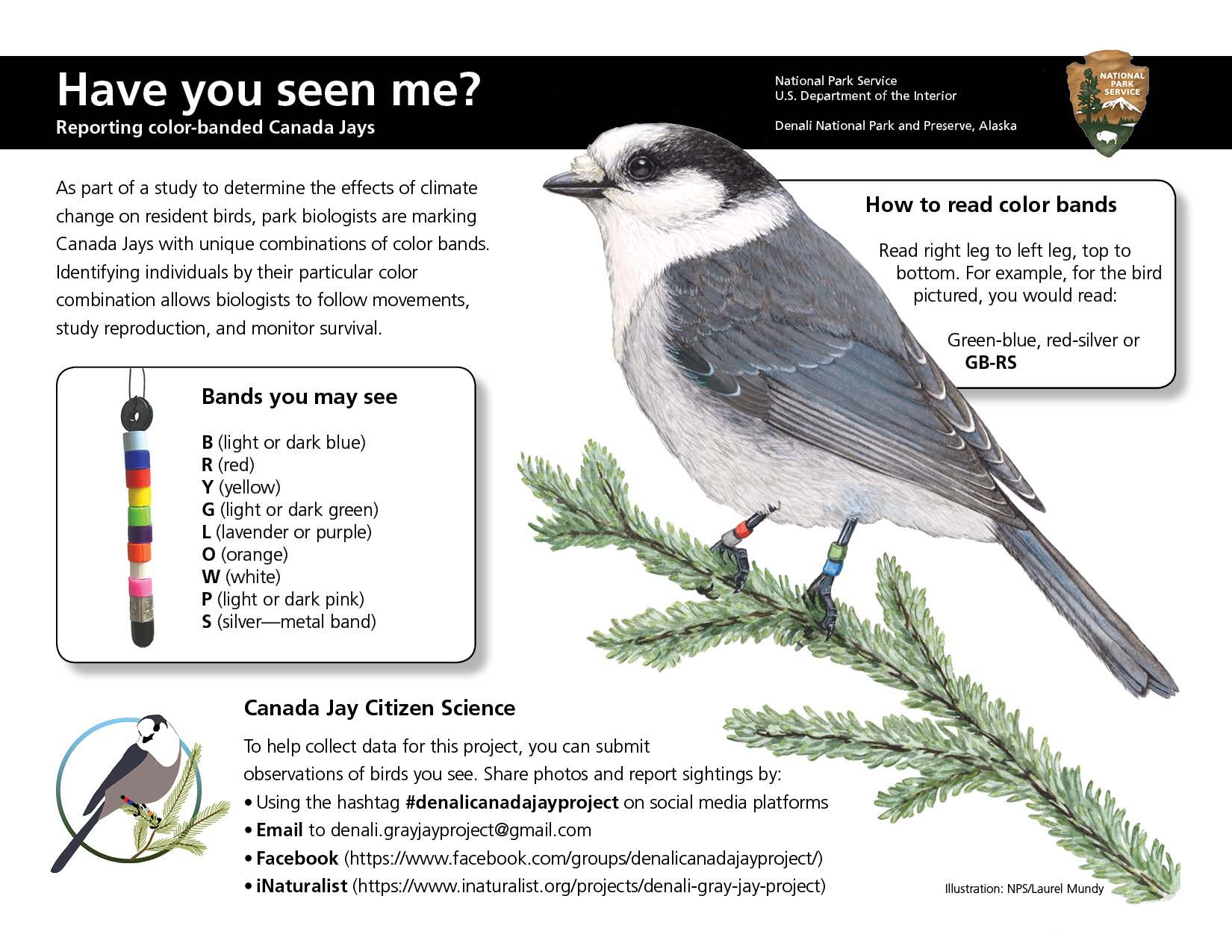 Canada Jay research outreach poster