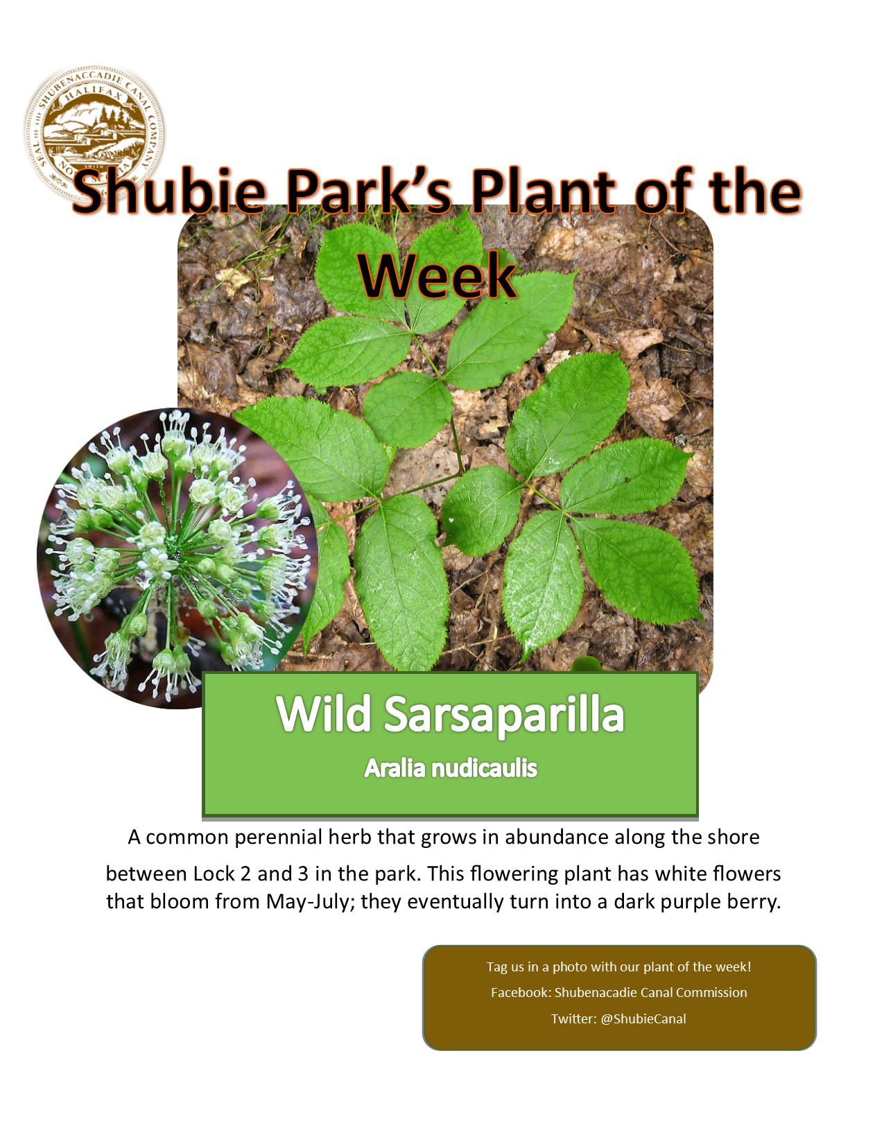 Plant-of-the-week-1.jpg