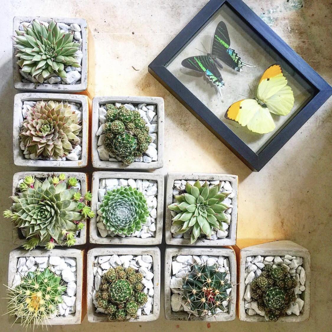 happy-cactus-3.jpg