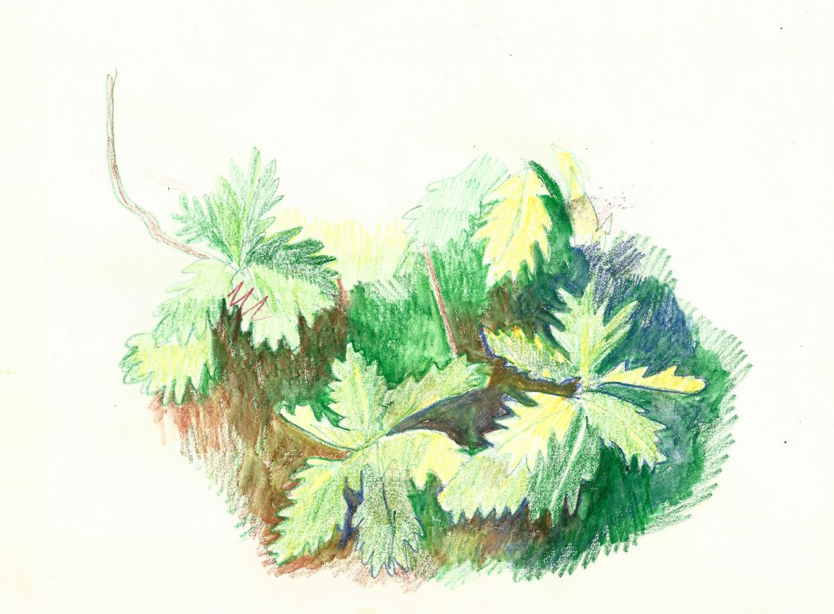 breadfruit leaves.jpg