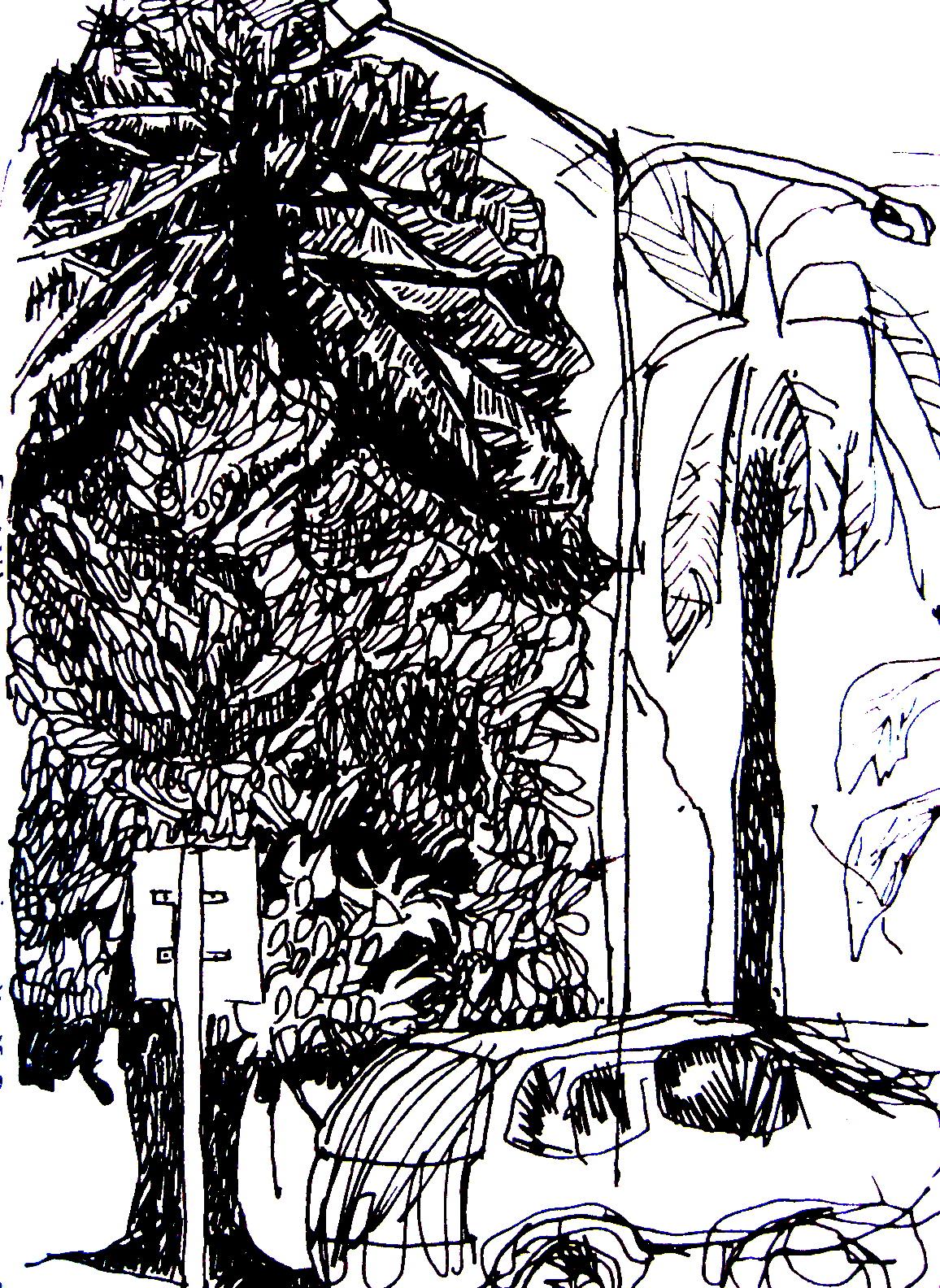 tree_and_car.jpg