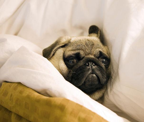 Good night! Sleep well.