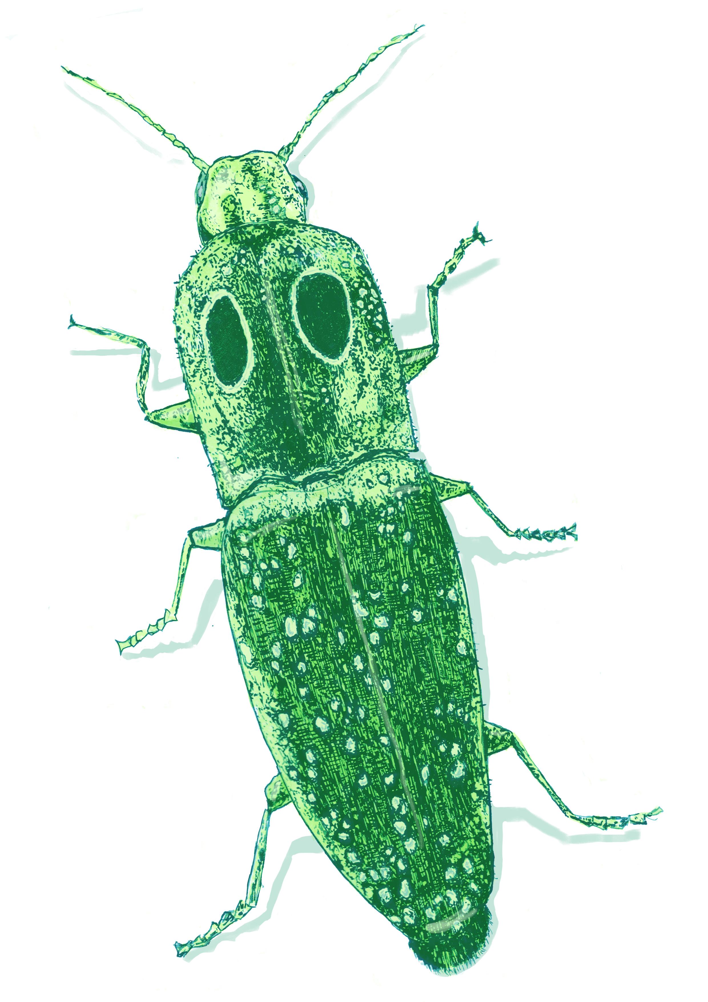 green bug.jpg