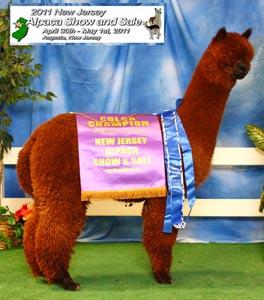 alpacas-soulsistershow.jpg