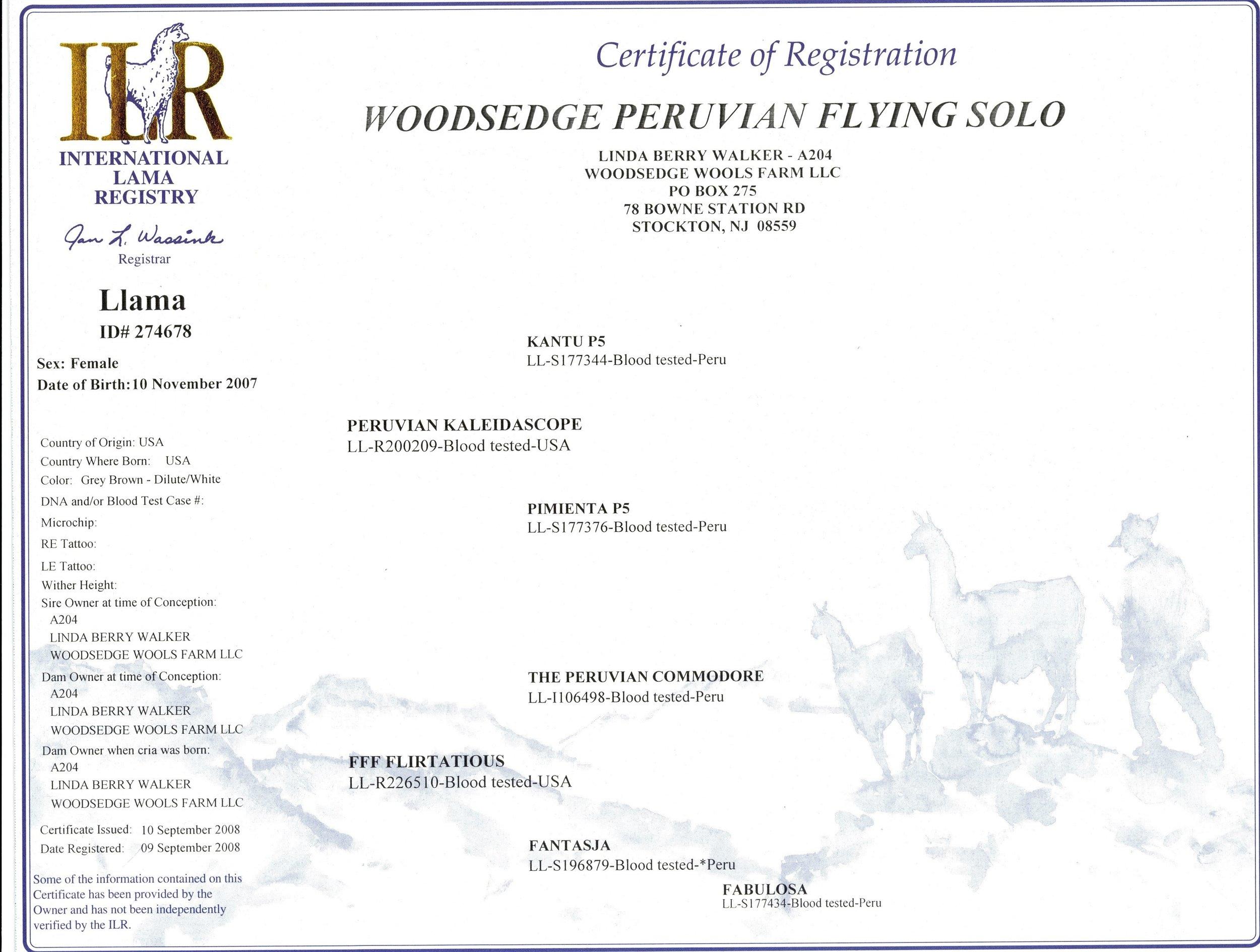 Flying Solo_ILR.jpg
