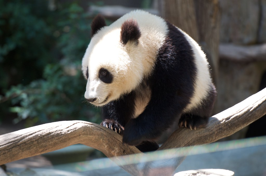 Visit the animals at the San Diego Zoo