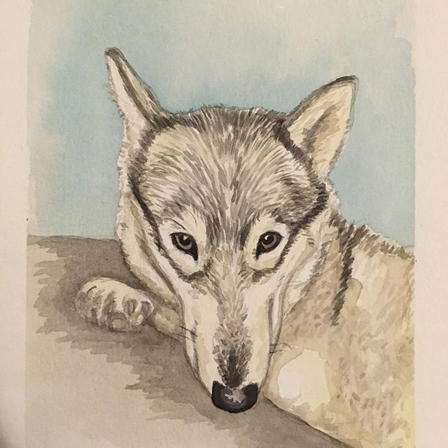 Finally got around to painting this cute pup! Thanks @aubsolute for the photo of your furry friend!  #dog #petportrait #practice #watercolour #paintings #art #mollygrayart #keepsake #dogsofinstagram