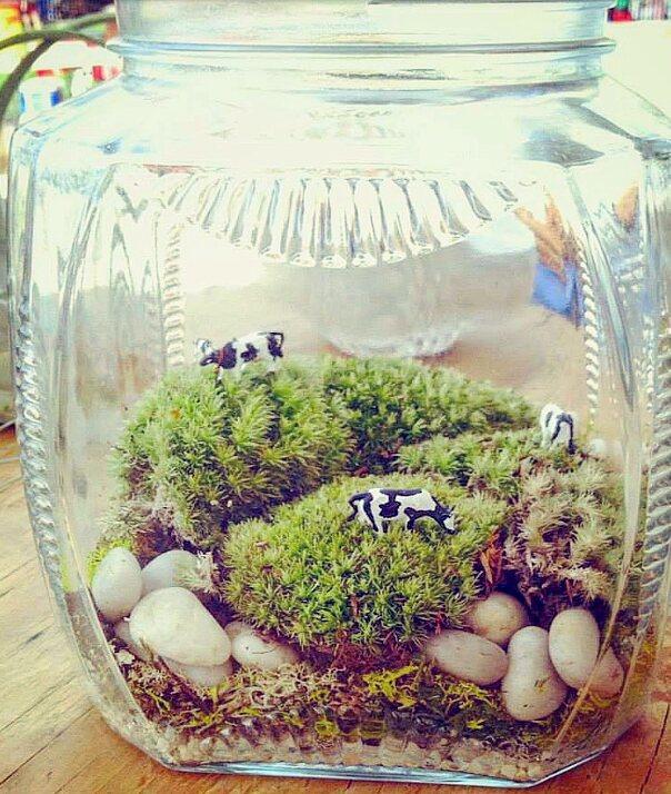 Mood Moss Grazing Cows Terrarium in Vintage Decorative Glass