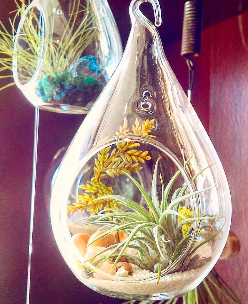 Hanging Airplant Terrarium