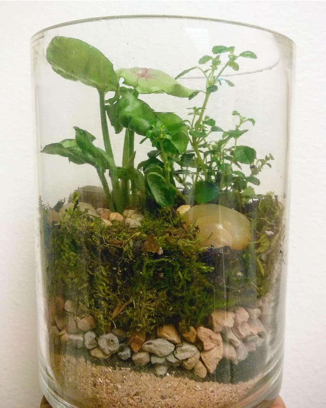 Cylinder Terrarium.png