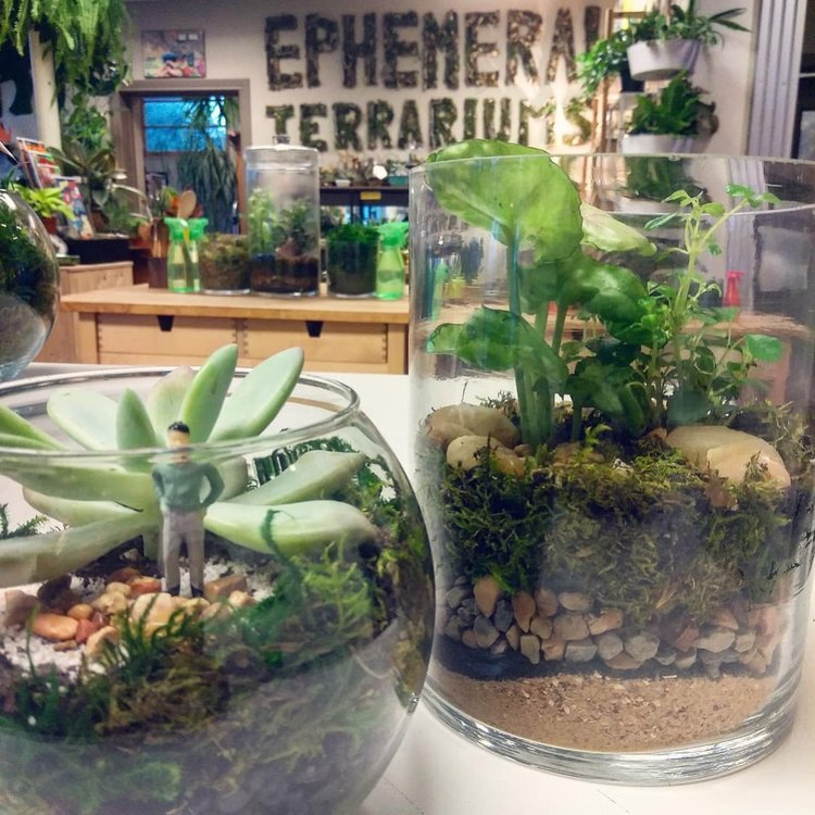 Cylinder+and+Bubble+Bowl+Terrarium.jpg