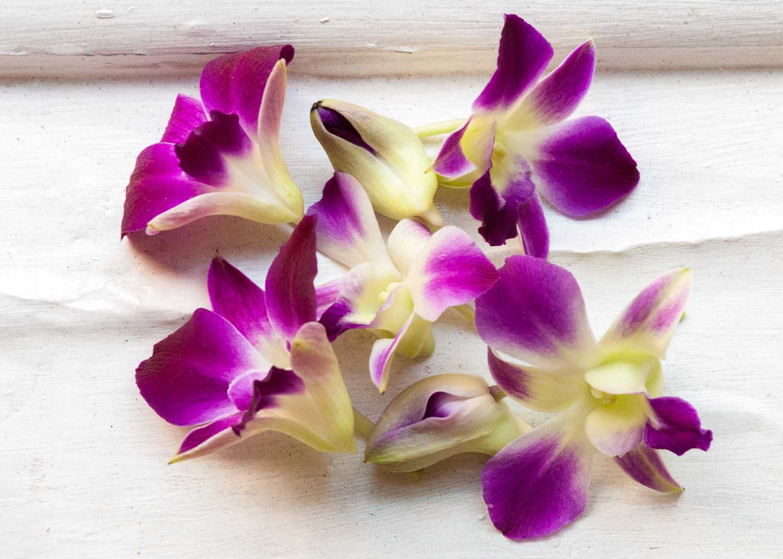 Orchids on Ledge