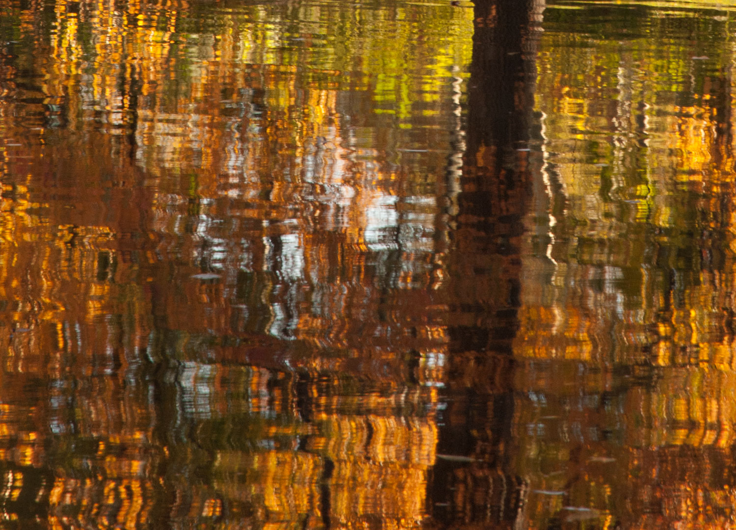 Orange and Yellow on Water