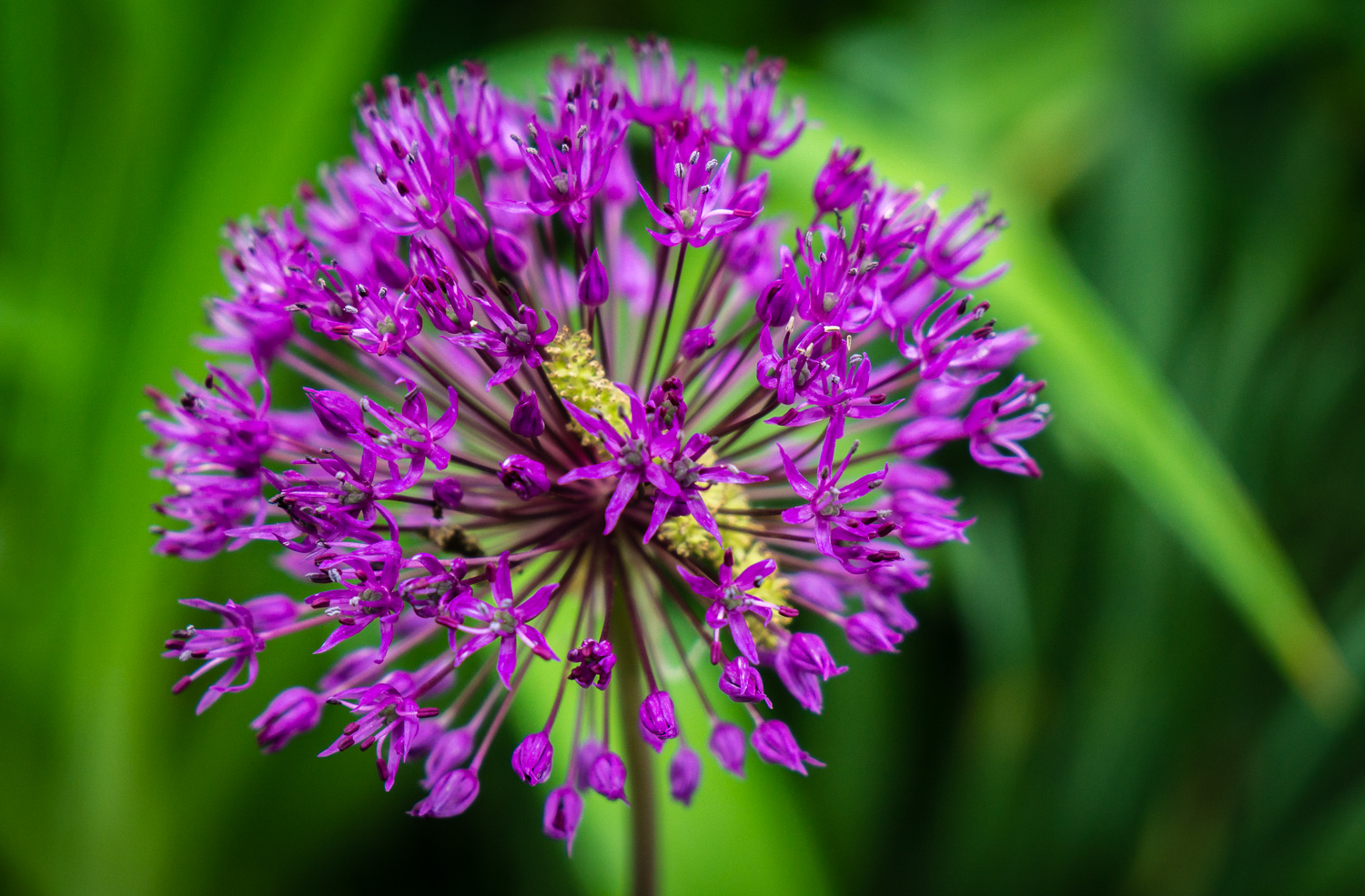 Spindly Purple