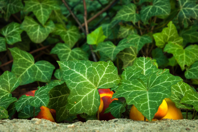 Three Strange Fruit in Hiding