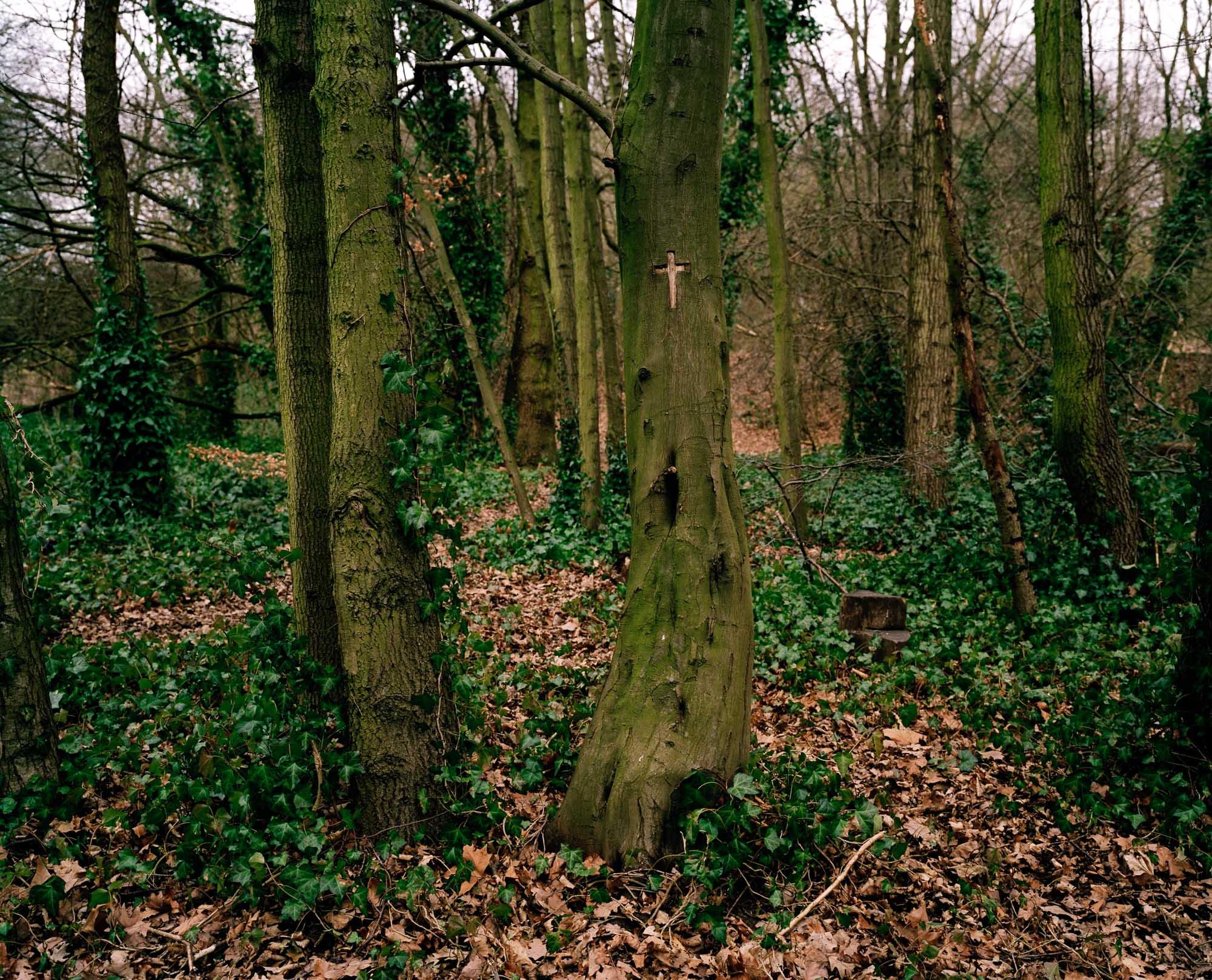 Heath 19.jpg
