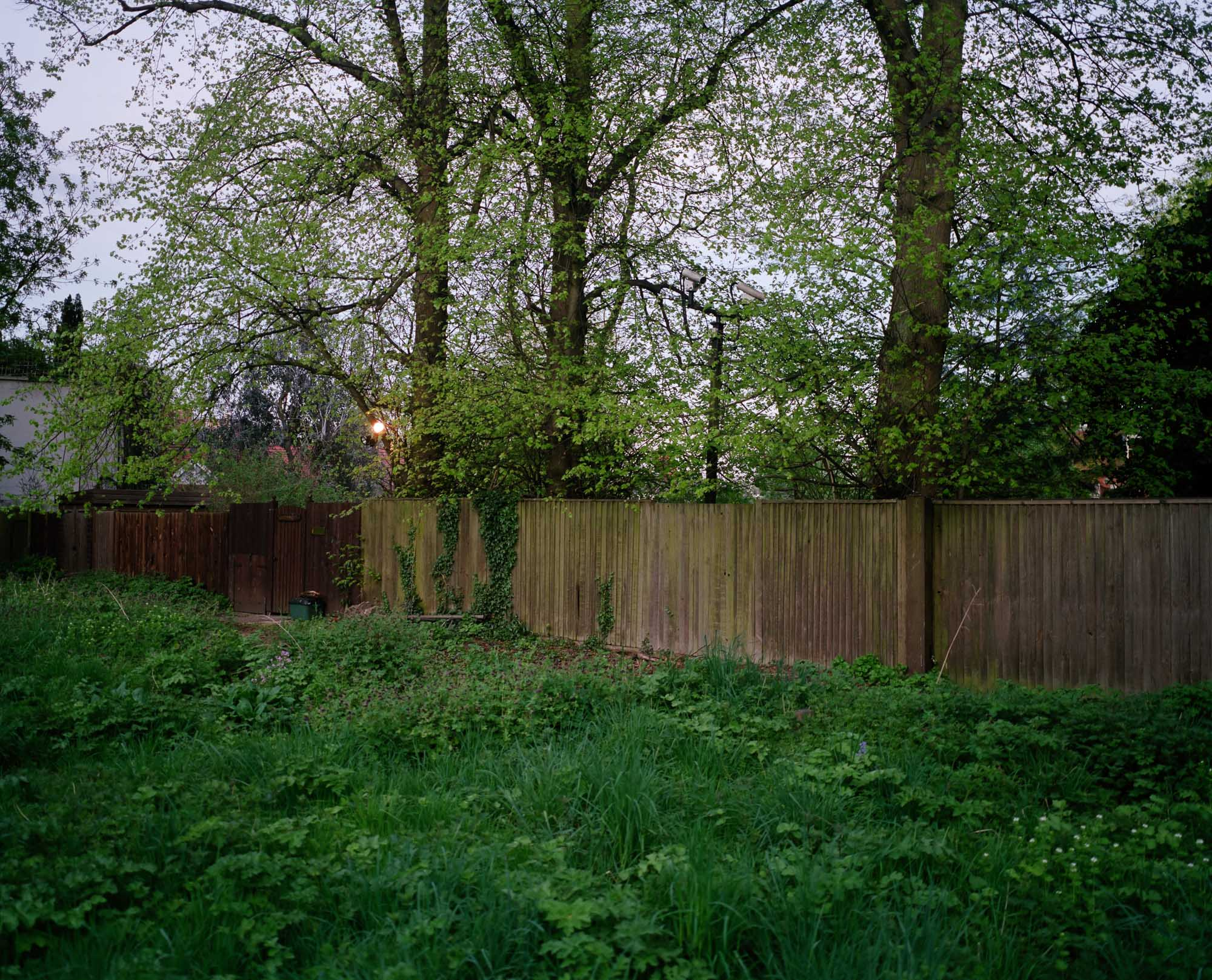 Heath 23.jpg