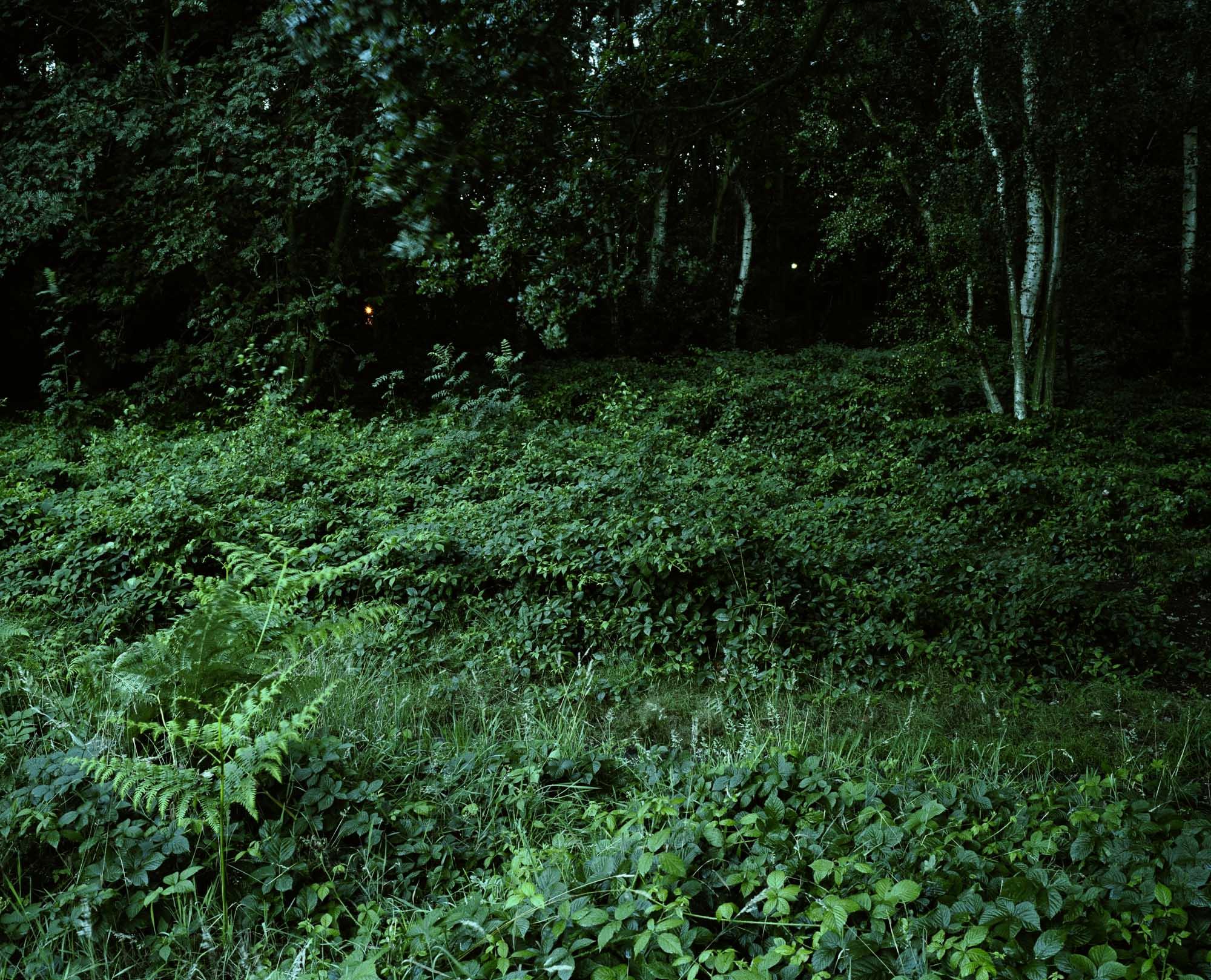 Heath 36.jpg