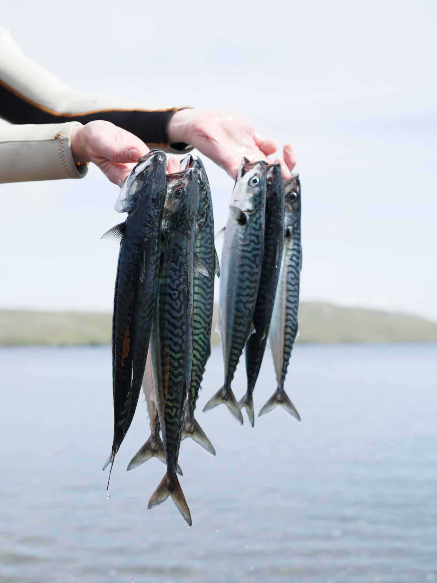Shetland02.jpg