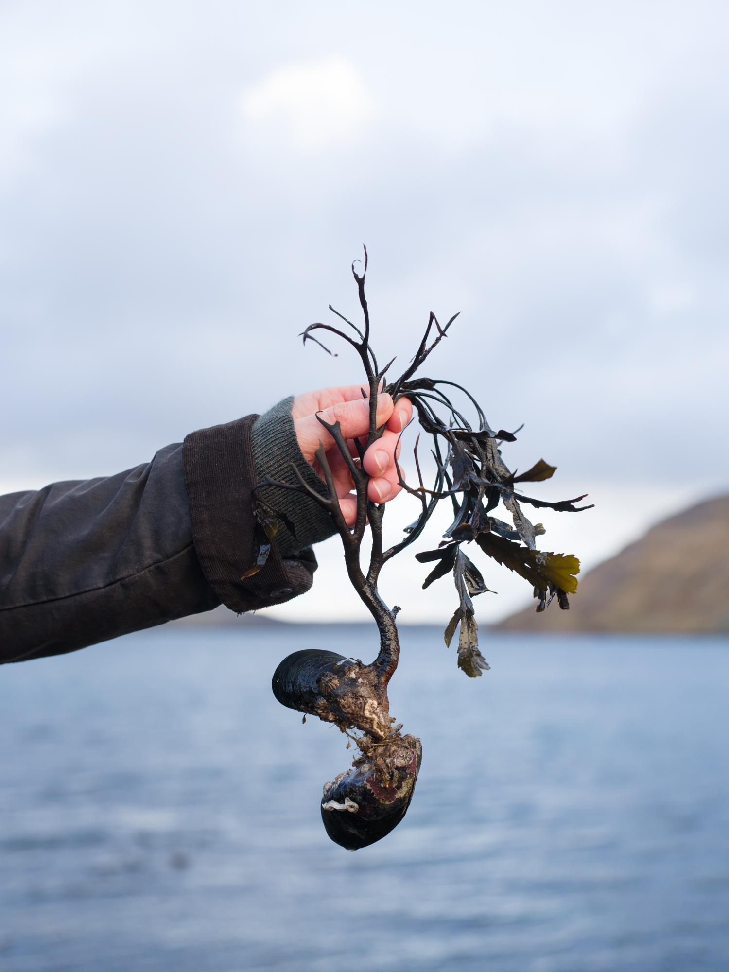 Shetland05.jpg