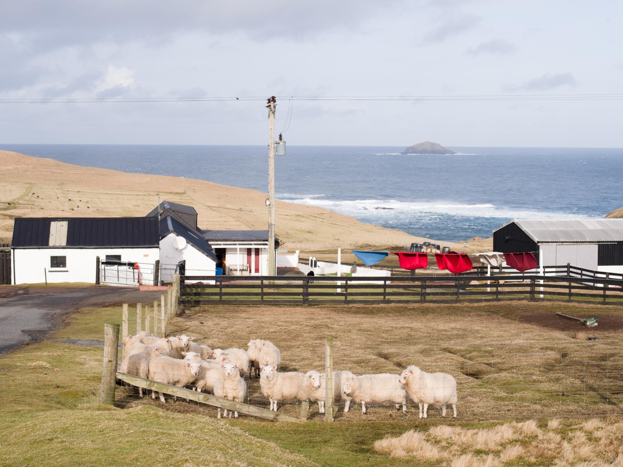 Shetland19.jpg