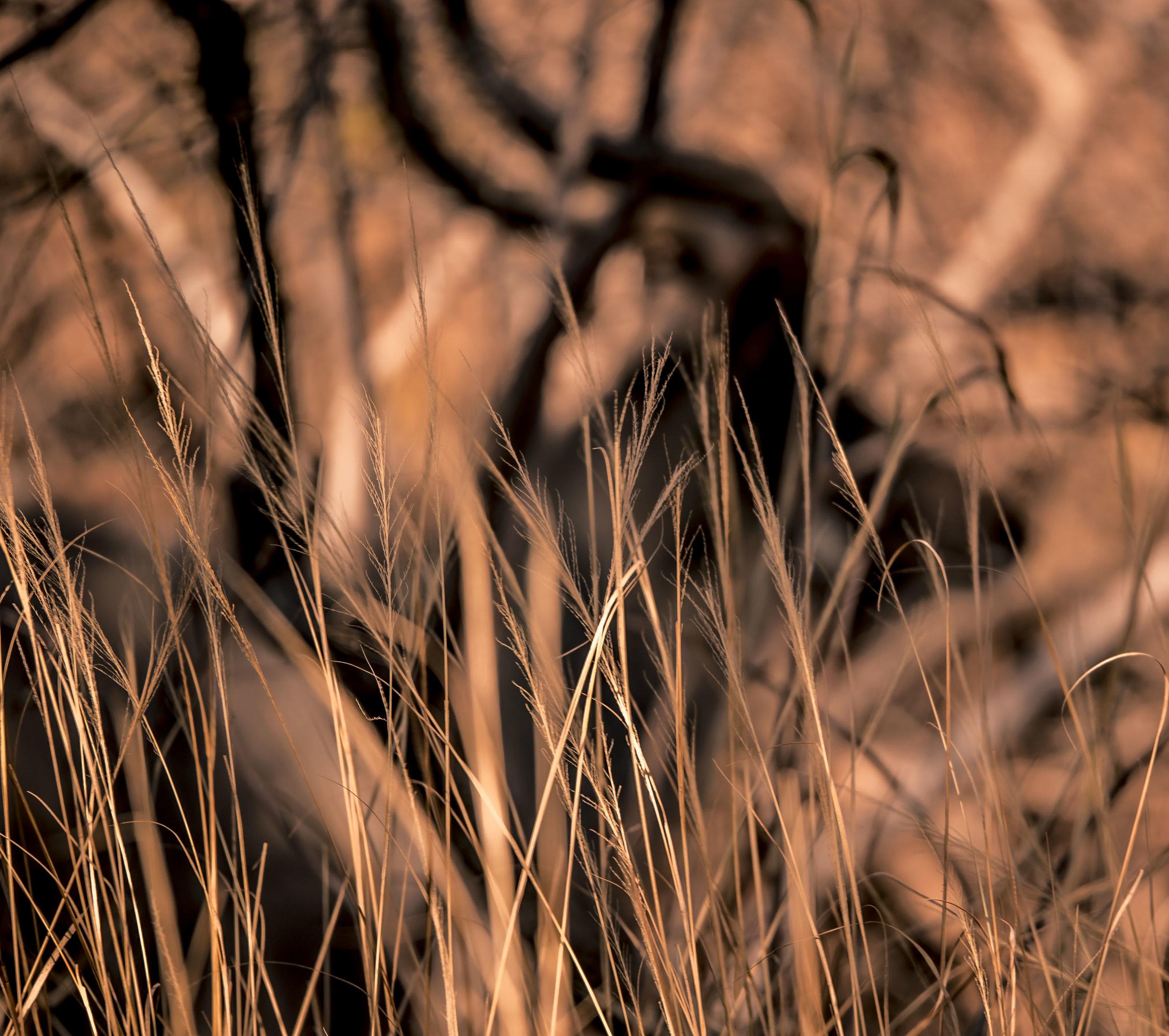 Liwonde Reserve22.jpg