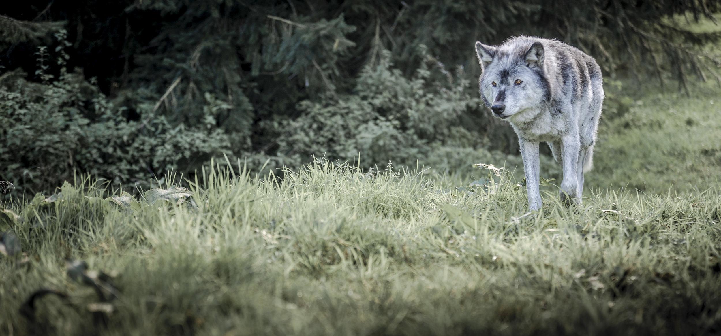 Anneka Wolf005.jpg