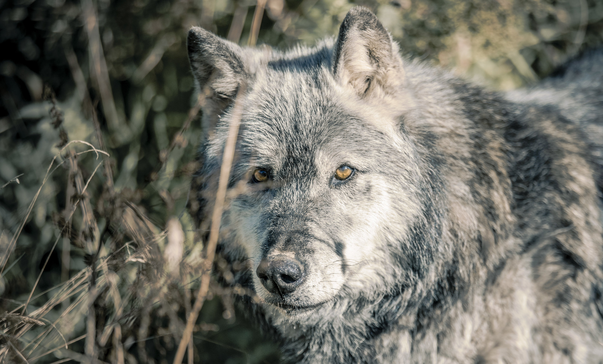 Anneka Wolf007.jpg