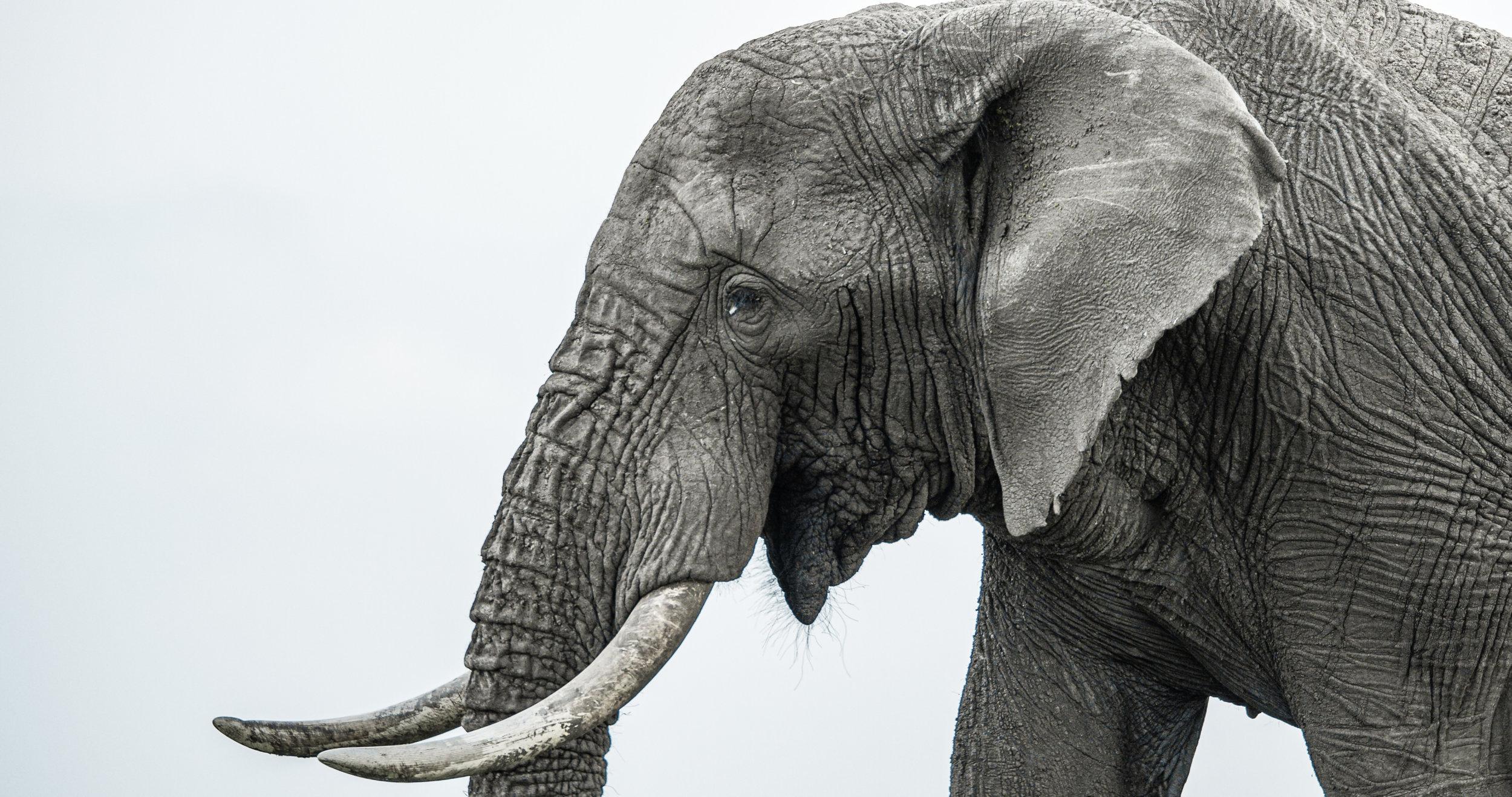 ELEPHANT 3.0001706.jpg
