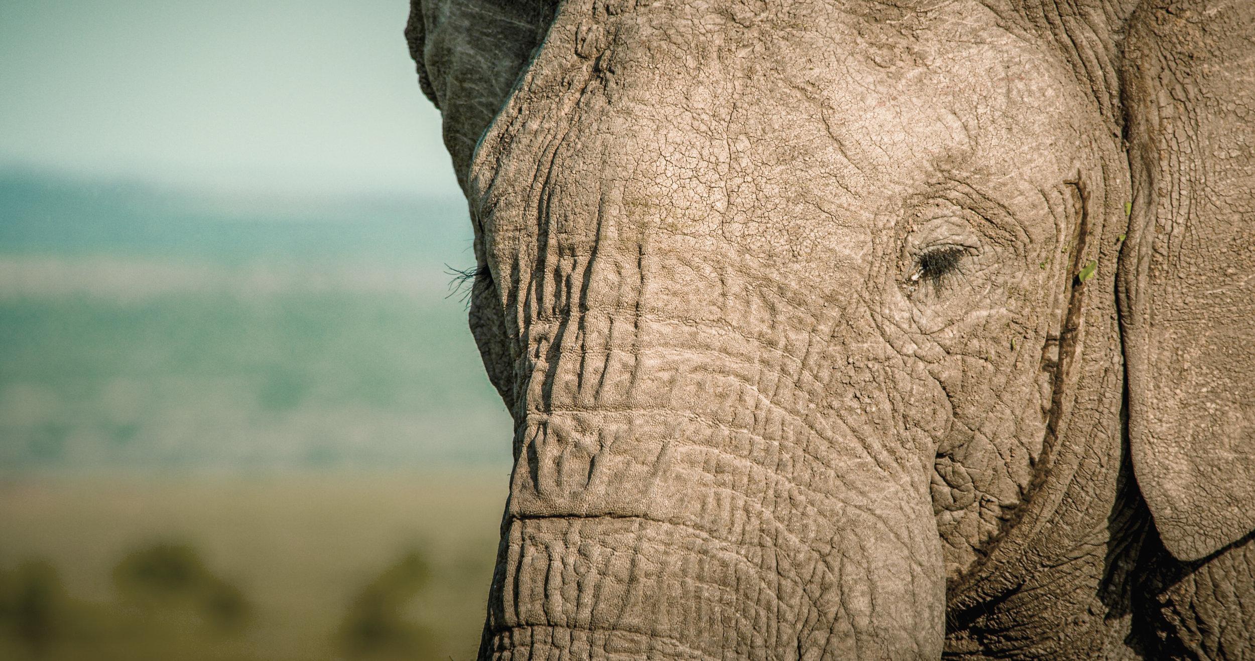 BULL ELEPHANT03.jpg