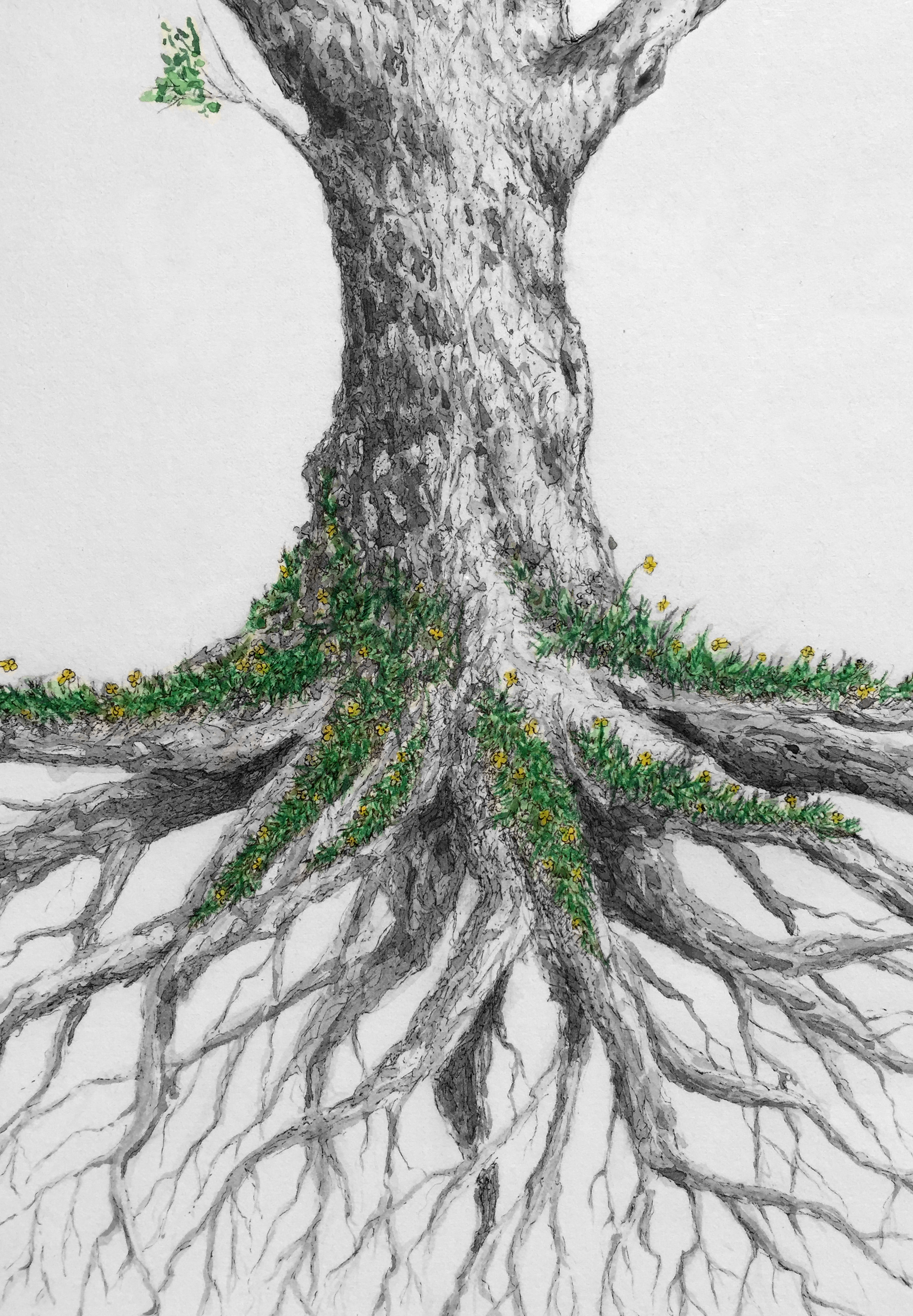 lower_tree.jpg