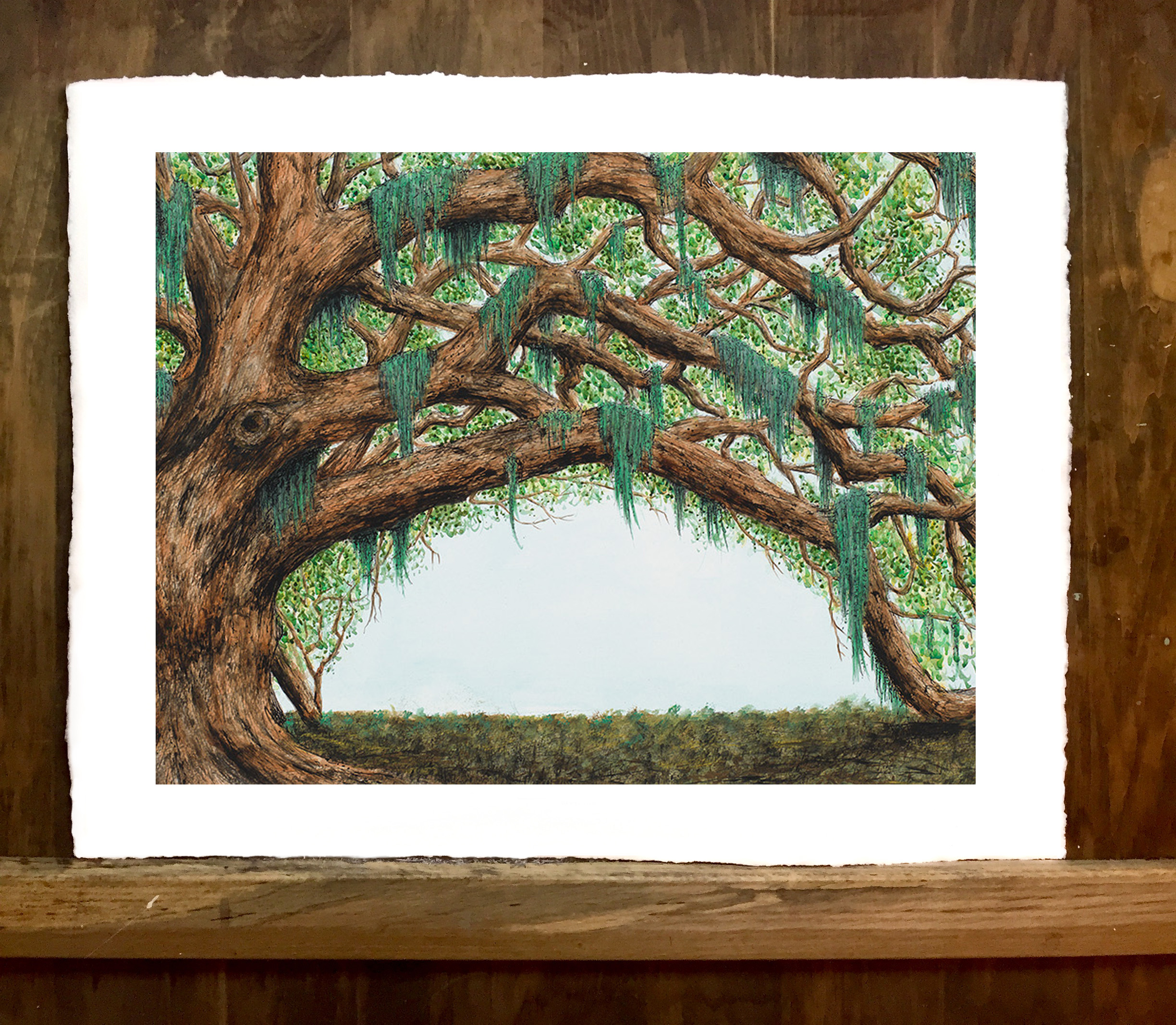 LIVE OAK CROPPED from $175.00