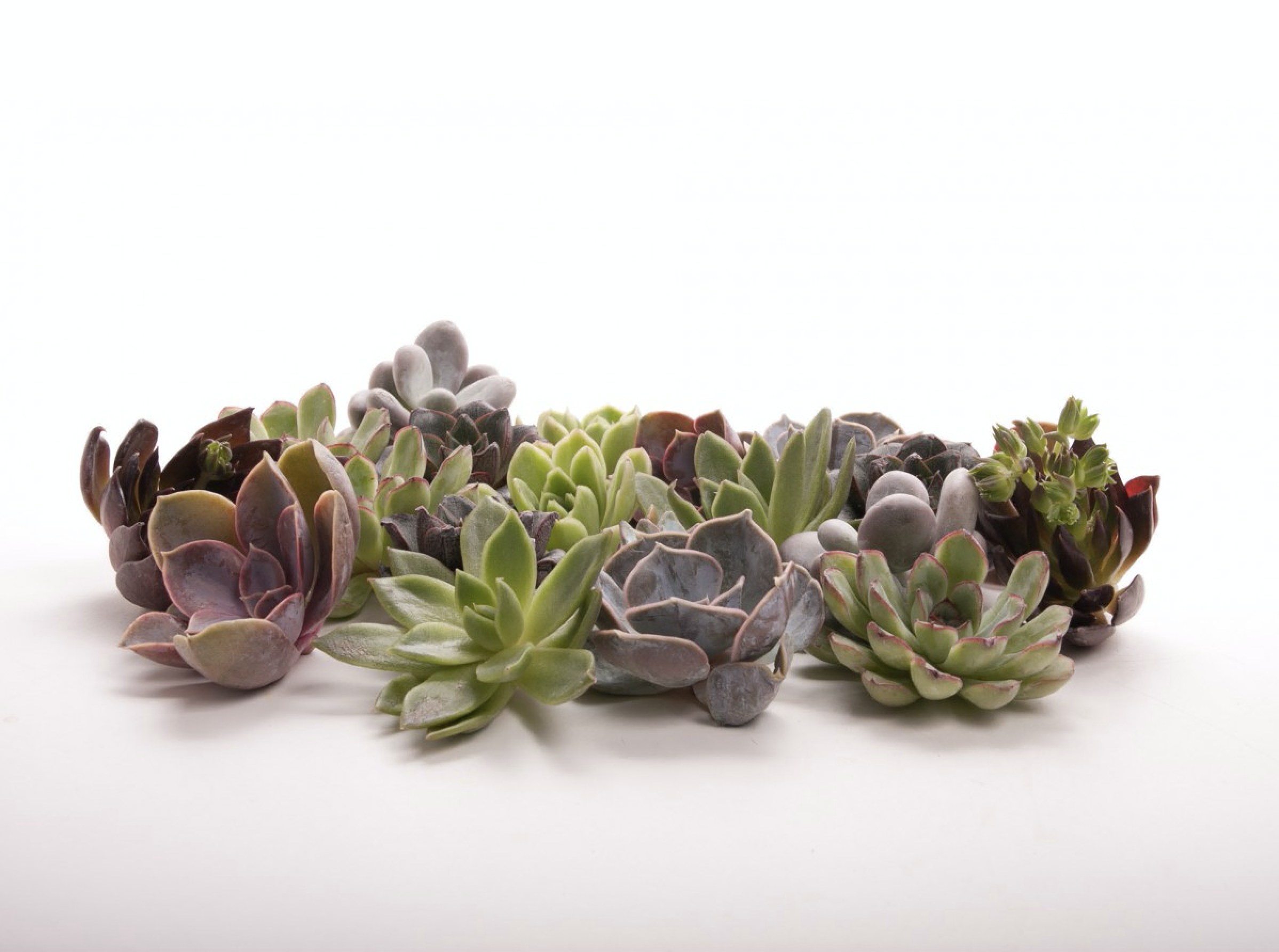 I love  Flower Muse  for their wide range of unique flora and their mini-succulents are perfect for this time of year.