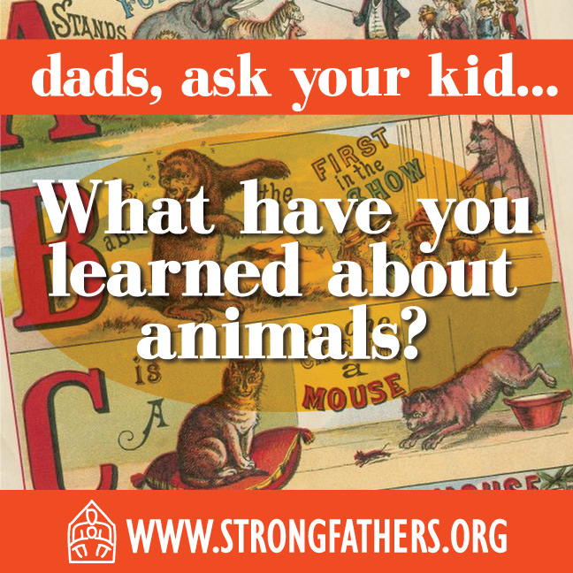 What have you learned about animals?