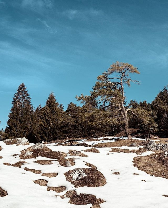 #snow – #rocks - #trees - #bluesky and #sunshine ... it don't have to be much to be #pretty⁣ ⁣ ________________________⁣ ⁣ #campervan #vanlife #vanlifediaries #travel #roadtrip #vanlifers #camper #adventuremobile #campvibes #adventure #camping #vanlifeideas #wanderlust #camperlife #vanlifeexplorers #vancrush #explore #bayern #visitbavaria #travelgram #instatravel #travelphotography #winter #nature