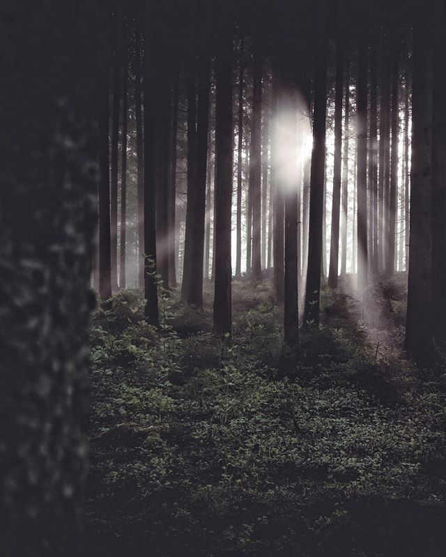 Moody Woods.⠀ ________________________⁣⠀ ⁣⠀ ⁣⠀ #travel #instagood #wanderlust #explore #landscape #outdoors #naturelovers #naturephotography #instatravel #travelgram #nature #hiking #adventure #beautifuldestinations #traveling #travelphotography #thegreatoutdoors #woods #germanroamers #nature #moodygrams #agameoftones #dark #artofvisuals #sunrays