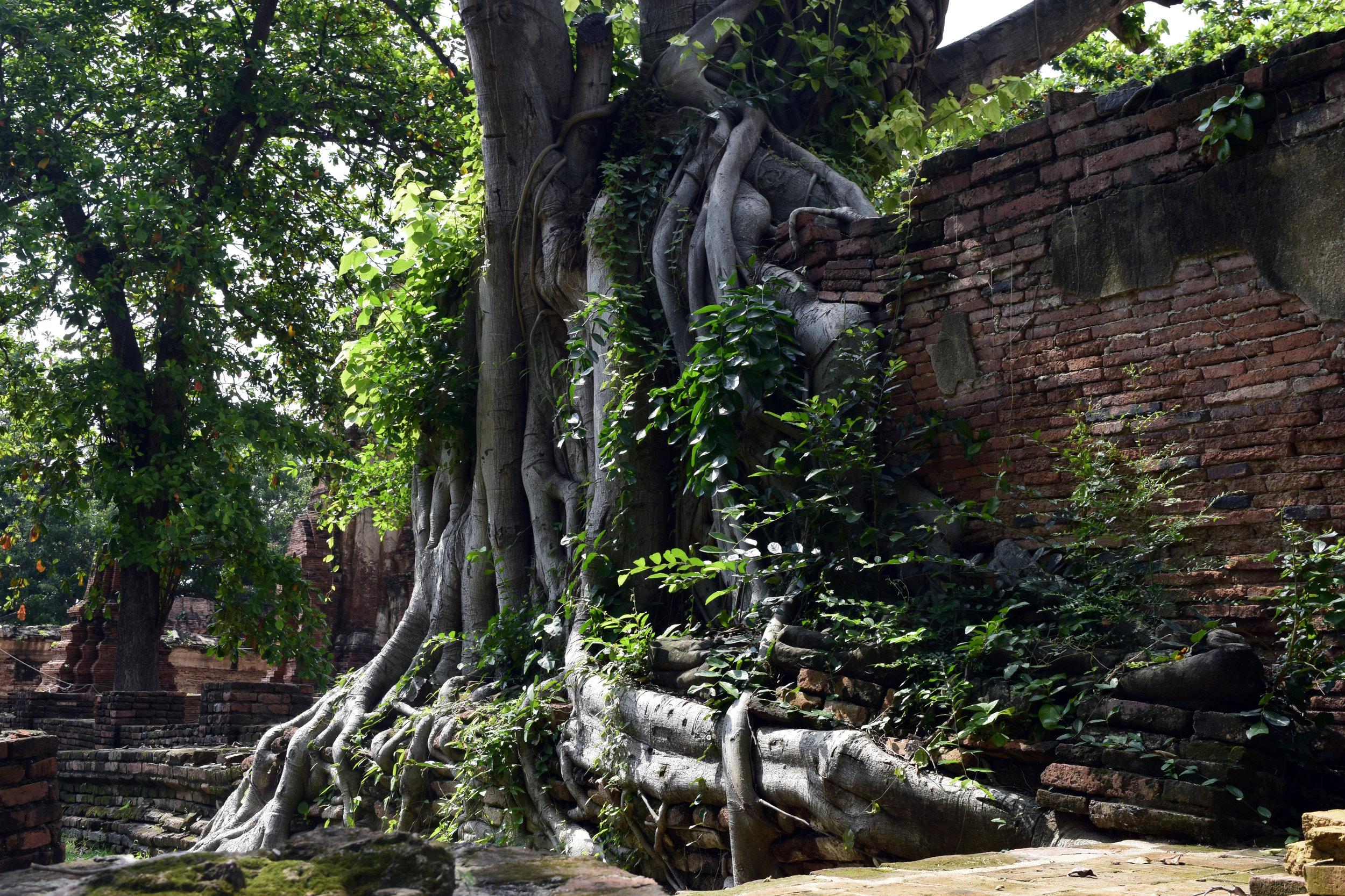 Thailand Adventure 69 .jpg