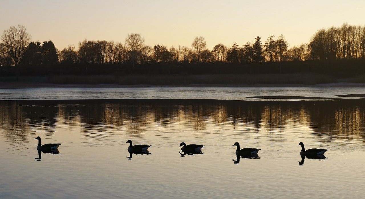 Ducks on a Pond Blogging