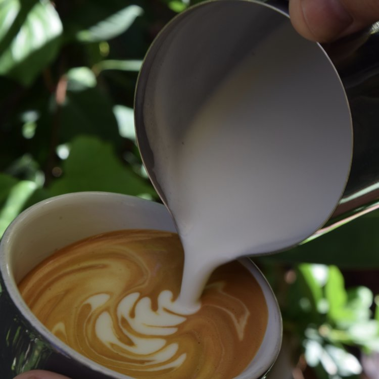 Pouring stretched milk for a flat white coffee