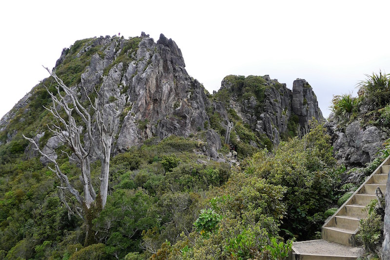 I see the steps... oh there's a ladder too...and there's someone on the top! The Pinnacles, Kauaeranga Valley, Coromandel