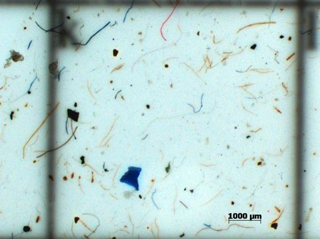 microplastic.jpg