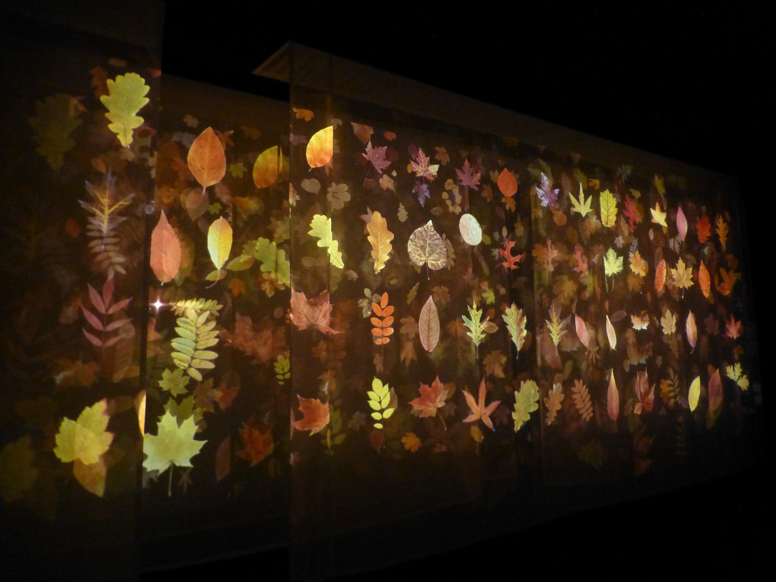 Dark Garden Tne Based Work 2012 Image courtesey of Andrew Carnie and GV Art
