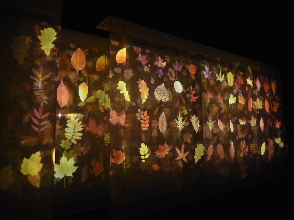 Dark Garden, Tne Based Work, 2012  Image courtesey of Andrew Carnie and GV Art