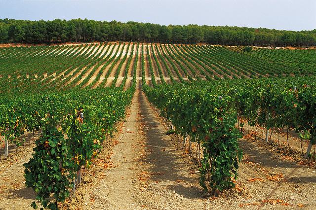 Theatre of Wine import - Terra Firma