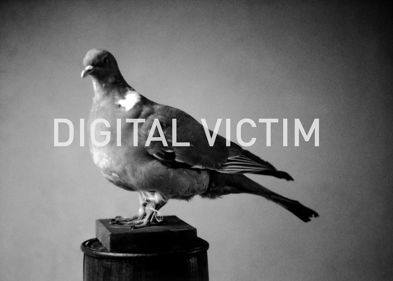 Nuambe_Caximingo_Portrait_DigitalVictim_Pigeon