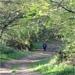 Path (2).jpg