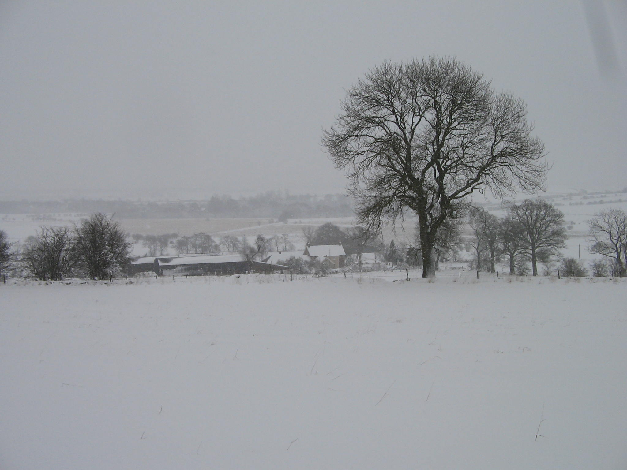 Winter Lunch - See Members' Bulletin in January for further details.