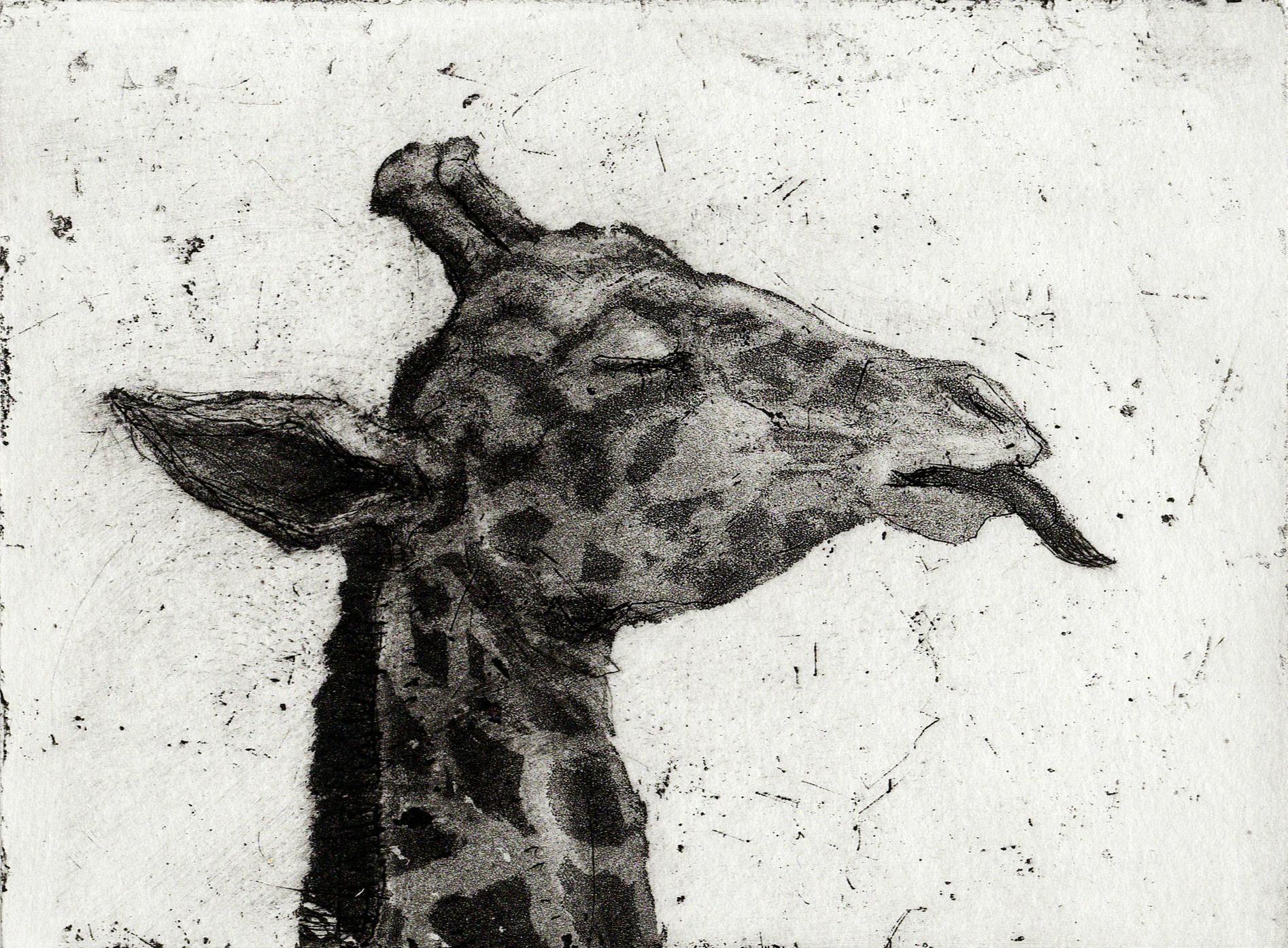 Giraffe, Etching