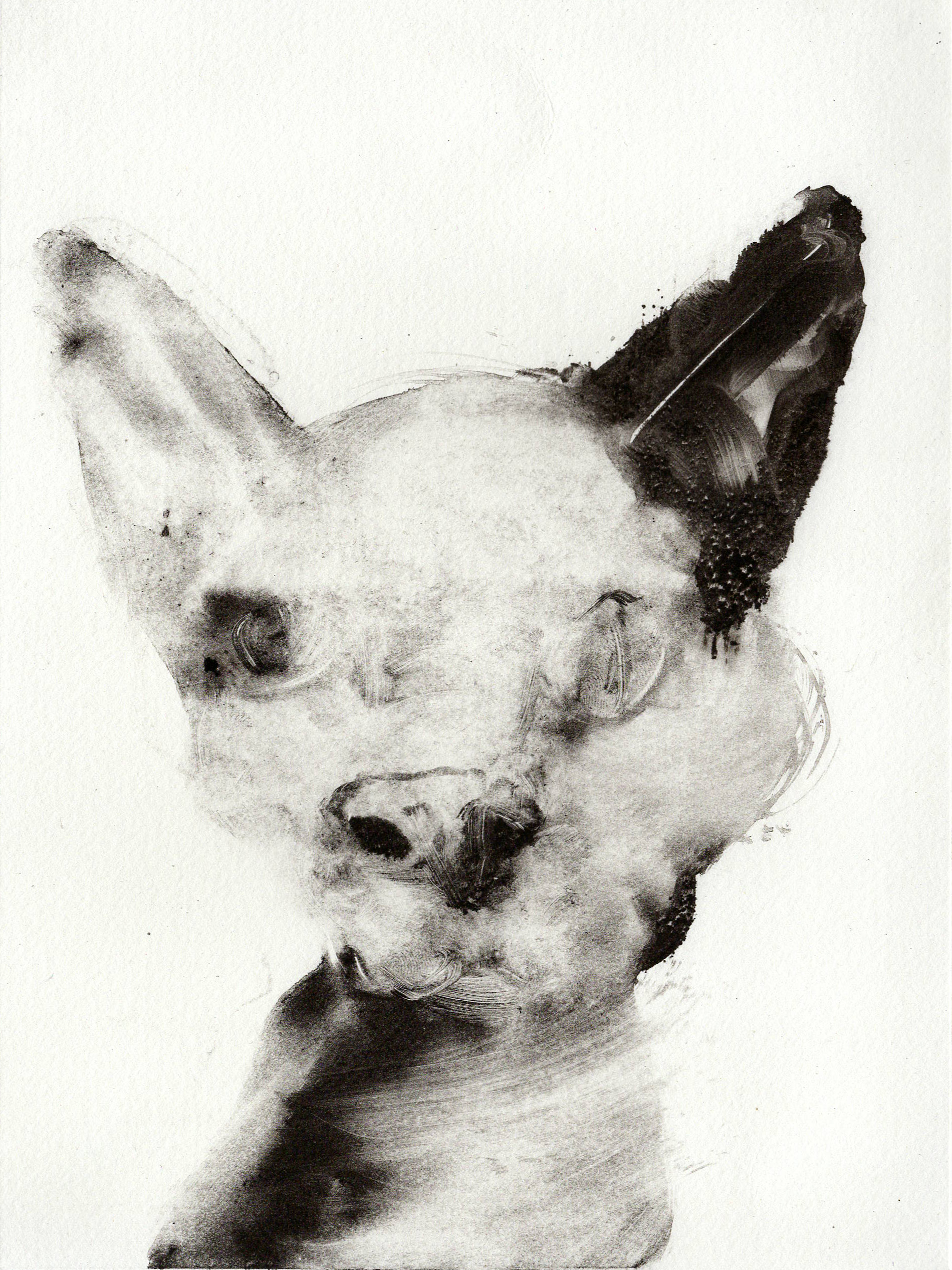 Cat Head, Monotype