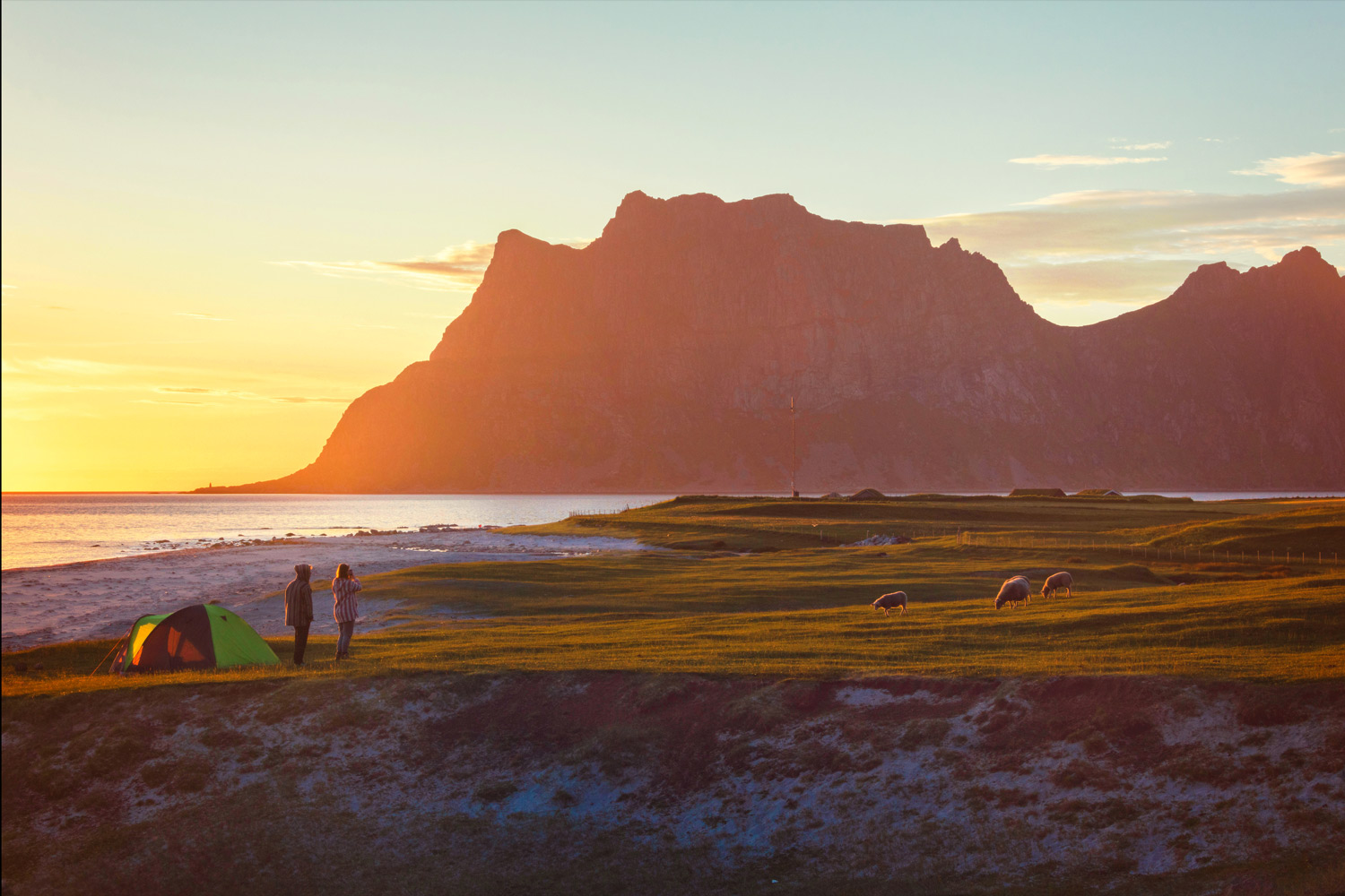 Utakleiv Beach . Camping tents and sheep in the green meadows lighted up by midnight sun reflected in sea